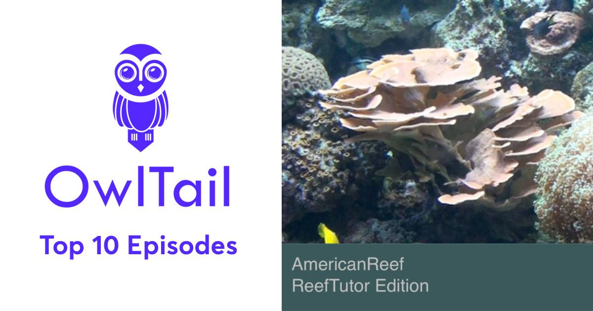 Best Episodes of AmericanReef - ReefTutor How to Setup a